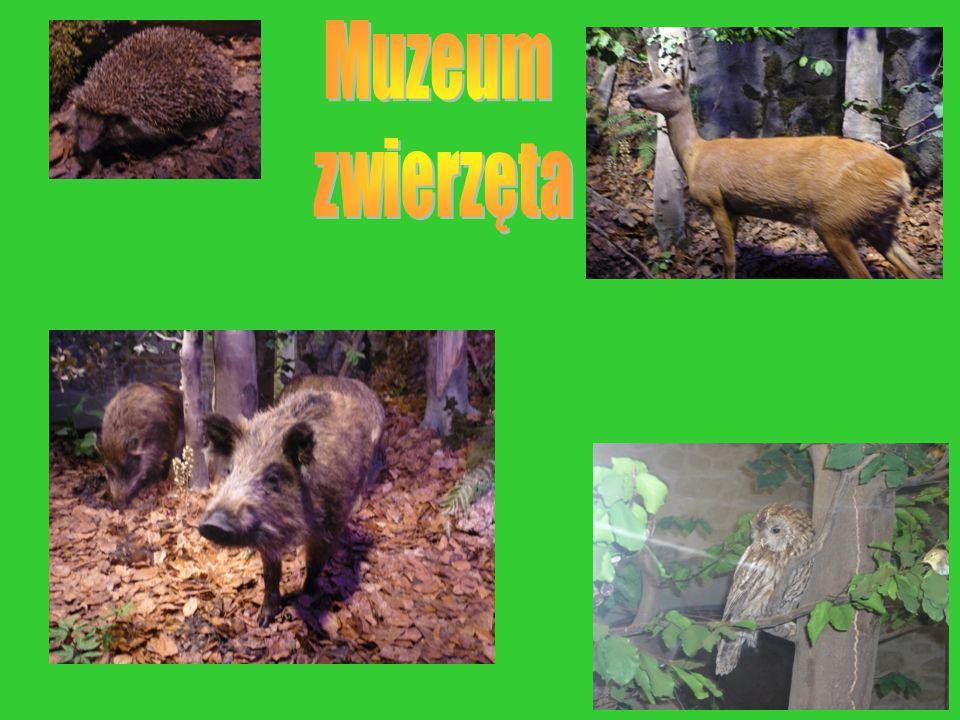 Muzeum zwierzęta