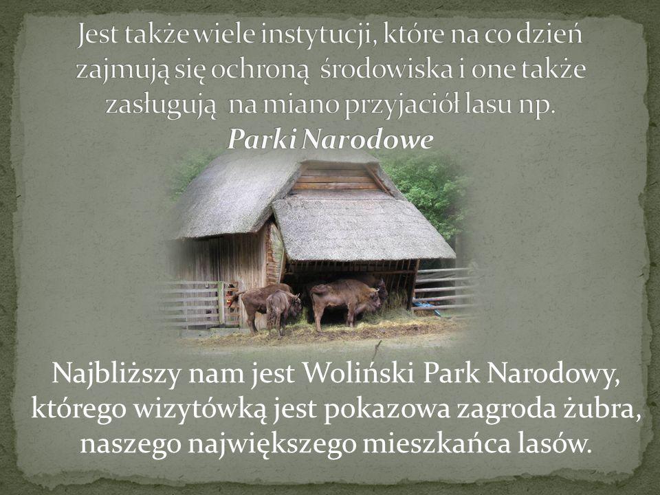 Jest także wiele instytucji, które na co dzień zajmują się ochroną środowiska i one także zasługują na miano przyjaciół lasu np. Parki Narodowe