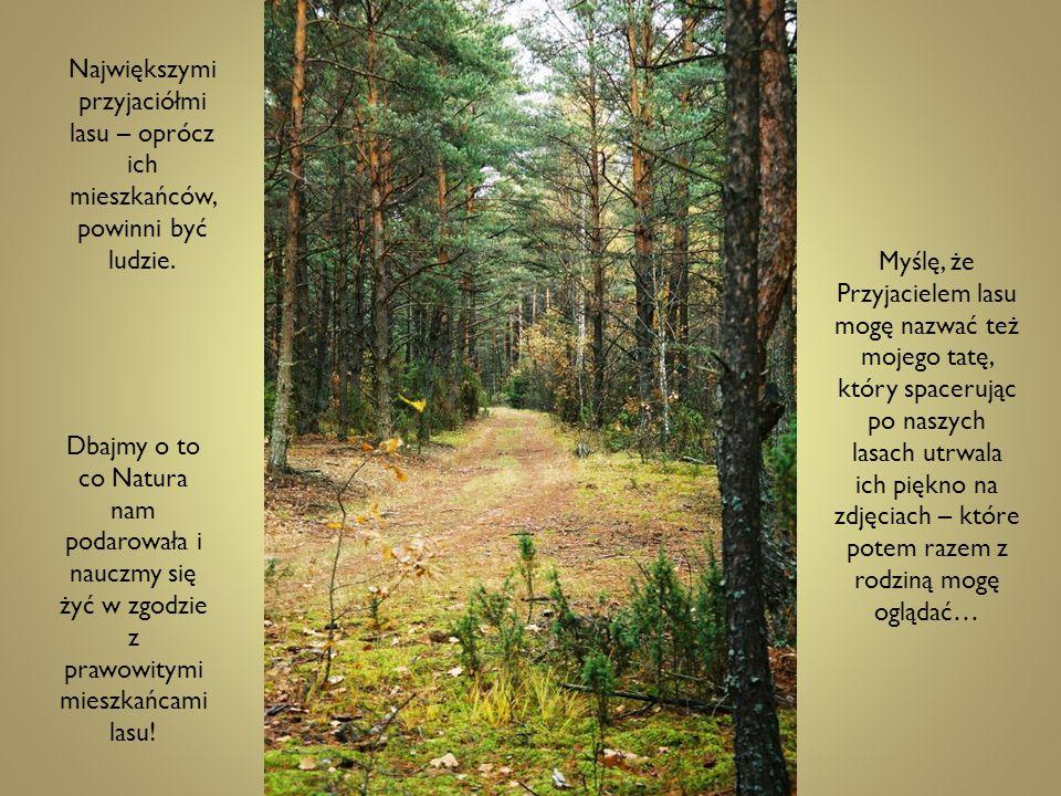 Największymi przyjaciółmi lasu – oprócz ich mieszkańców, powinni być ludzie.