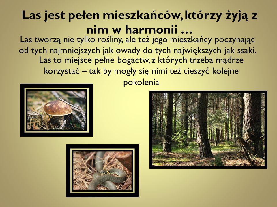 Las jest pełen mieszkańców, którzy żyją z nim w harmonii …