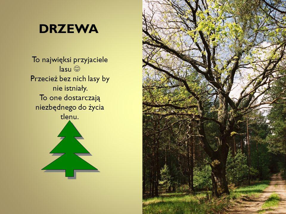 DRZEWA To najwięksi przyjaciele lasu 