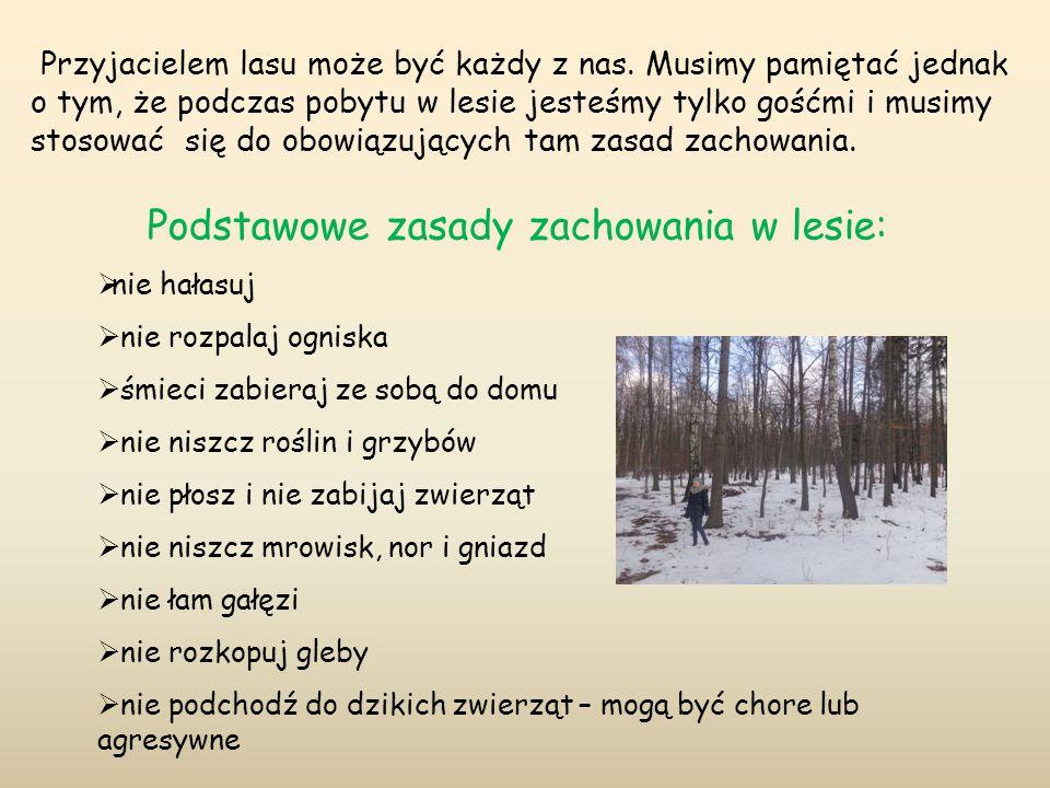Podstawowe zasady zachowania w lesie: