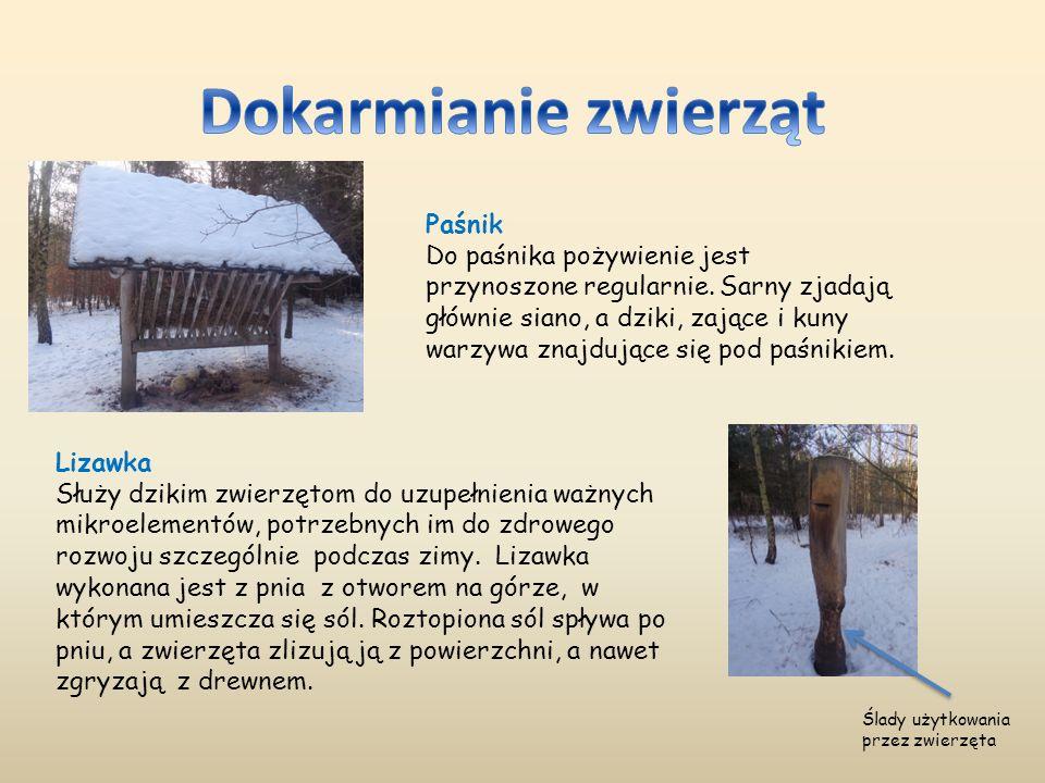 Dokarmianie zwierząt Paśnik