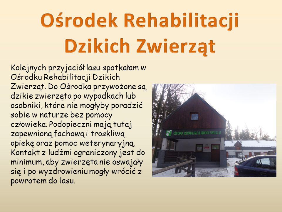 Ośrodek Rehabilitacji Dzikich Zwierząt