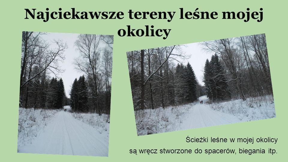 Najciekawsze tereny leśne mojej okolicy