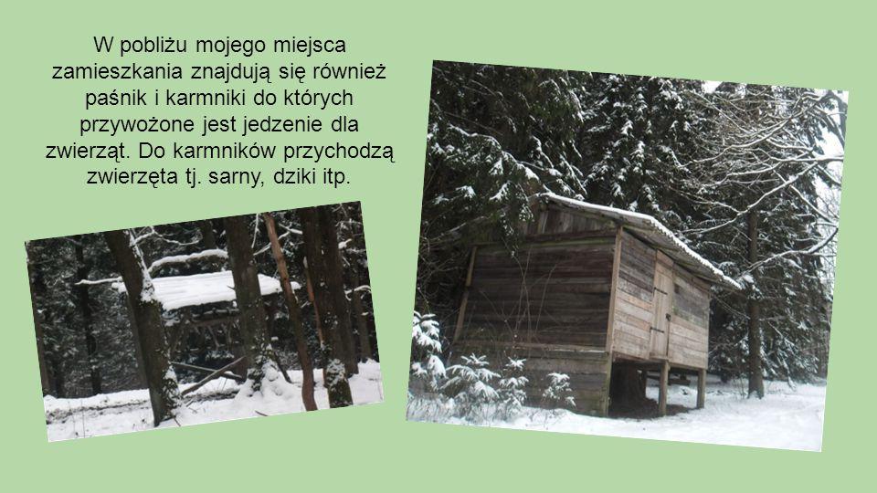 W pobliżu mojego miejsca zamieszkania znajdują się również paśnik i karmniki do których przywożone jest jedzenie dla zwierząt.