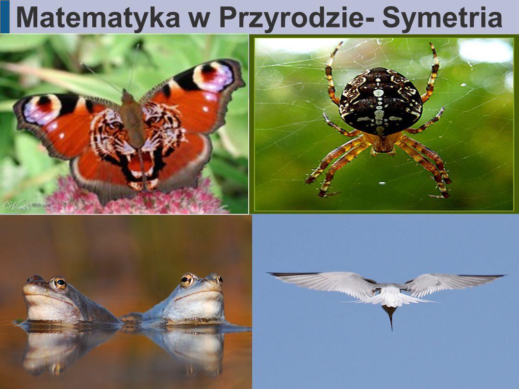 Matematyka w Przyrodzie- Symetria