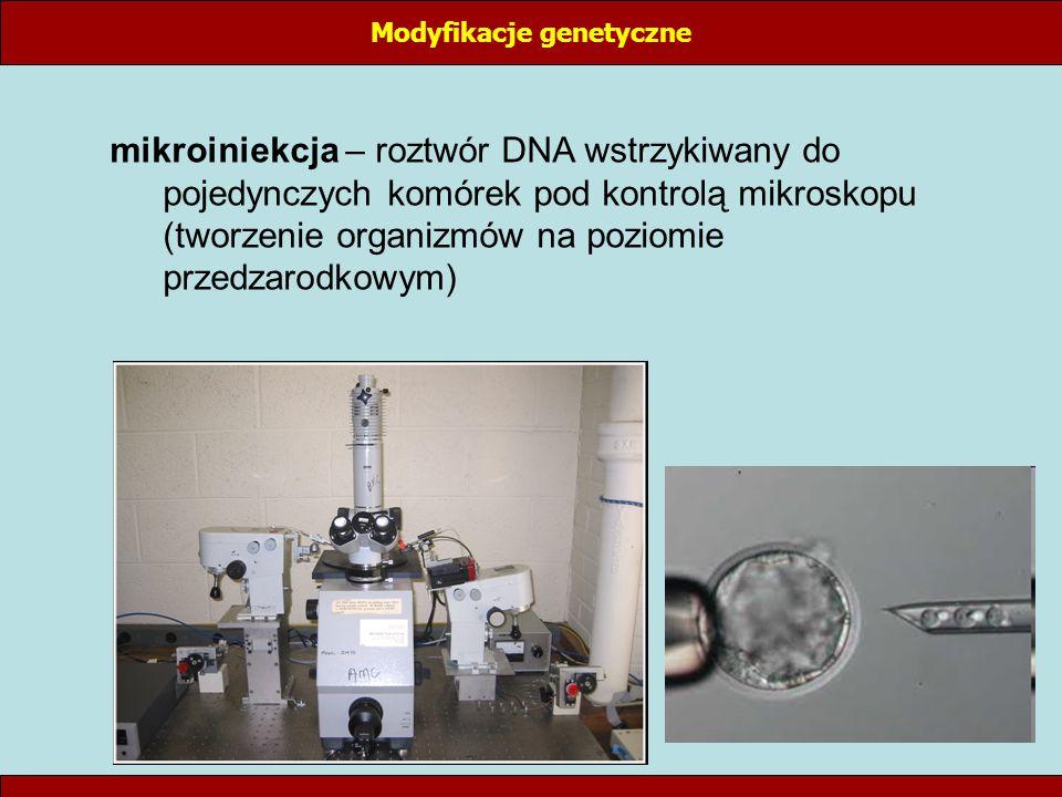 Modyfikacje genetyczne