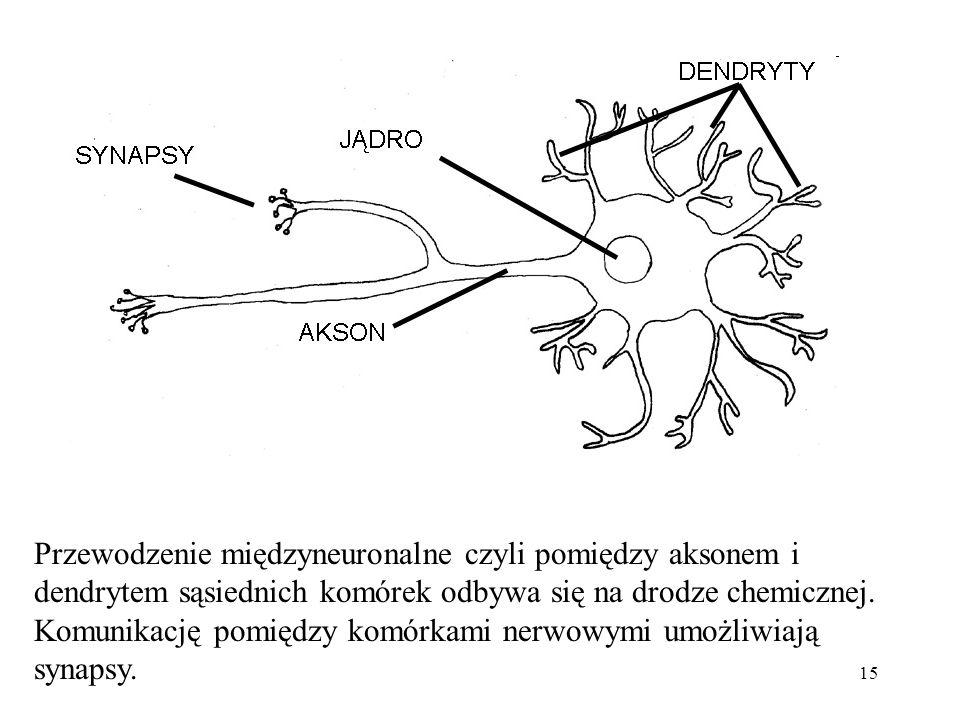 Przewodzenie międzyneuronalne czyli pomiędzy aksonem i dendrytem sąsiednich komórek odbywa się na drodze chemicznej.