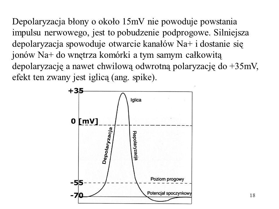 Depolaryzacja błony o około 15mV nie powoduje powstania impulsu nerwowego, jest to pobudzenie podprogowe.