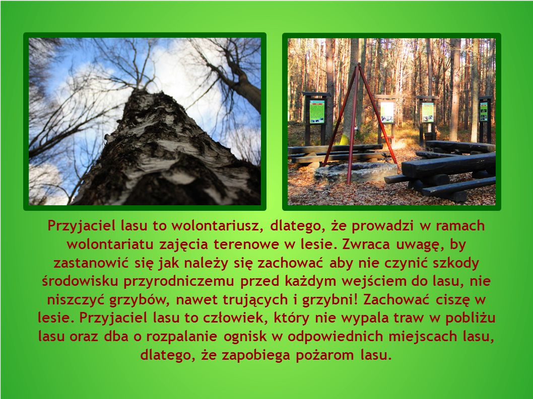 Przyjaciel lasu to wolontariusz, dlatego, że prowadzi w ramach wolontariatu zajęcia terenowe w lesie.