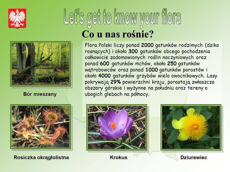 Let s get to know your flora
