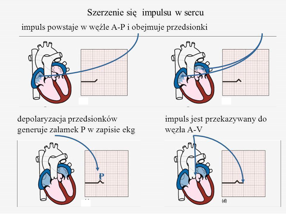 Szerzenie się impulsu w sercu