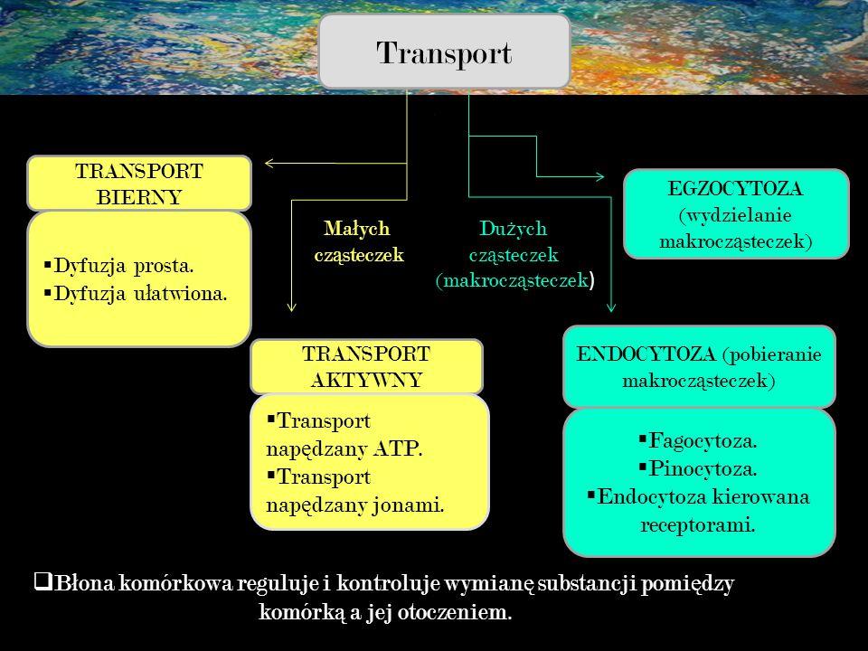 Transport TRANSPORT BIERNY. EGZOCYTOZA (wydzielanie makrocząsteczek) Dyfuzja prosta. Dyfuzja ułatwiona.