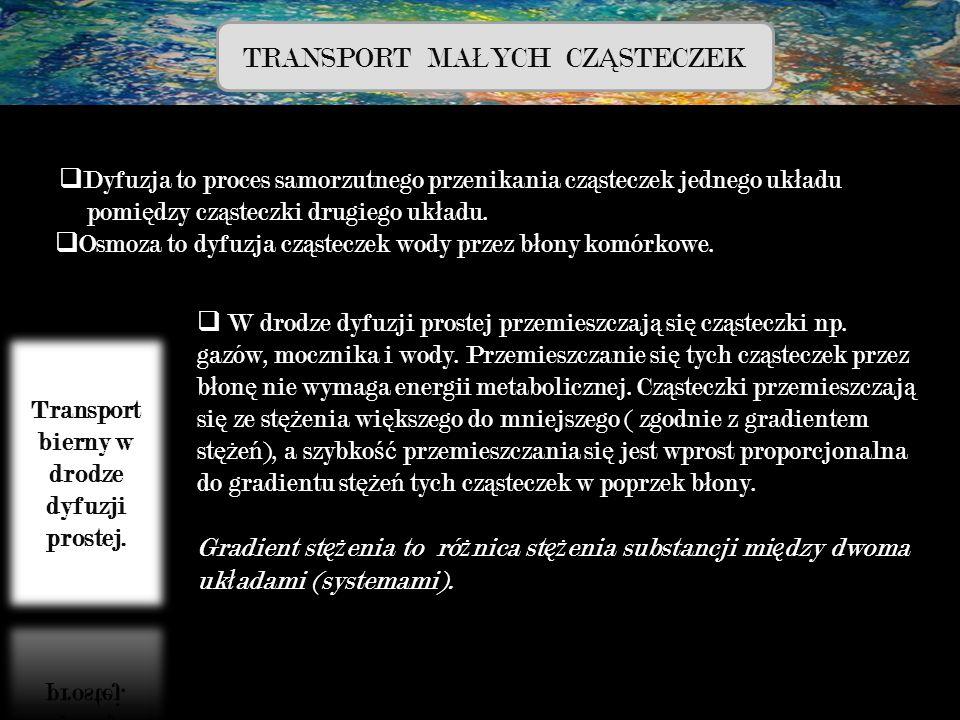 Transport bierny w drodze dyfuzji prostej.