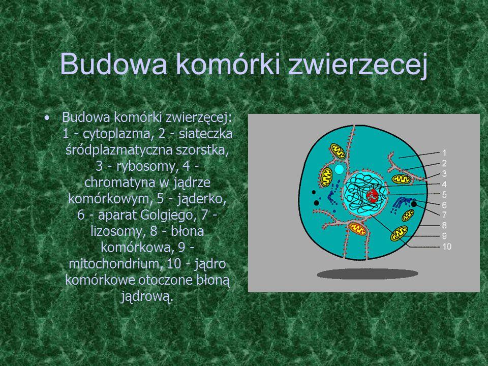 Budowa komórki zwierzecej