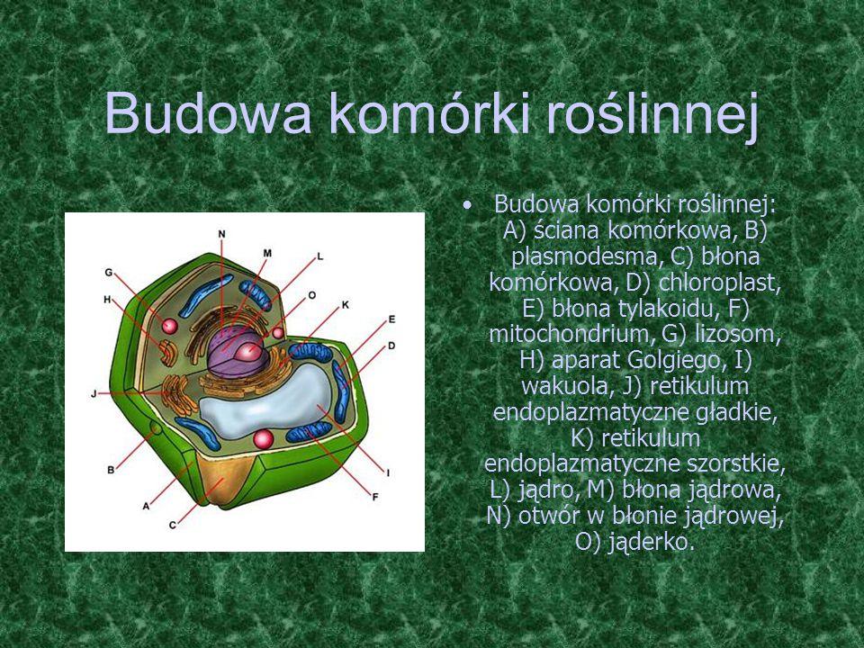 Budowa komórki roślinnej