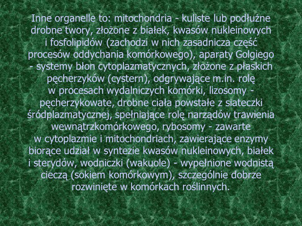 Inne organelle to: mitochondria - kuliste lub podłużne drobne twory, złożone z białek, kwasów nukleinowych i fosfolipidów (zachodzi w nich zasadnicza część procesów oddychania komórkowego), aparaty Golgiego - systemy błon cytoplazmatycznych, złożone z płaskich pęcherzyków (cystern), odgrywające m.in.