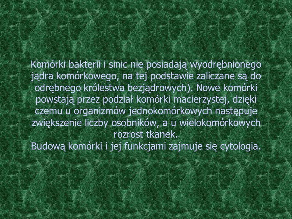 Komórki bakterii i sinic nie posiadają wyodrębnionego jądra komórkowego, na tej podstawie zaliczane są do odrębnego królestwa bezjądrowych).