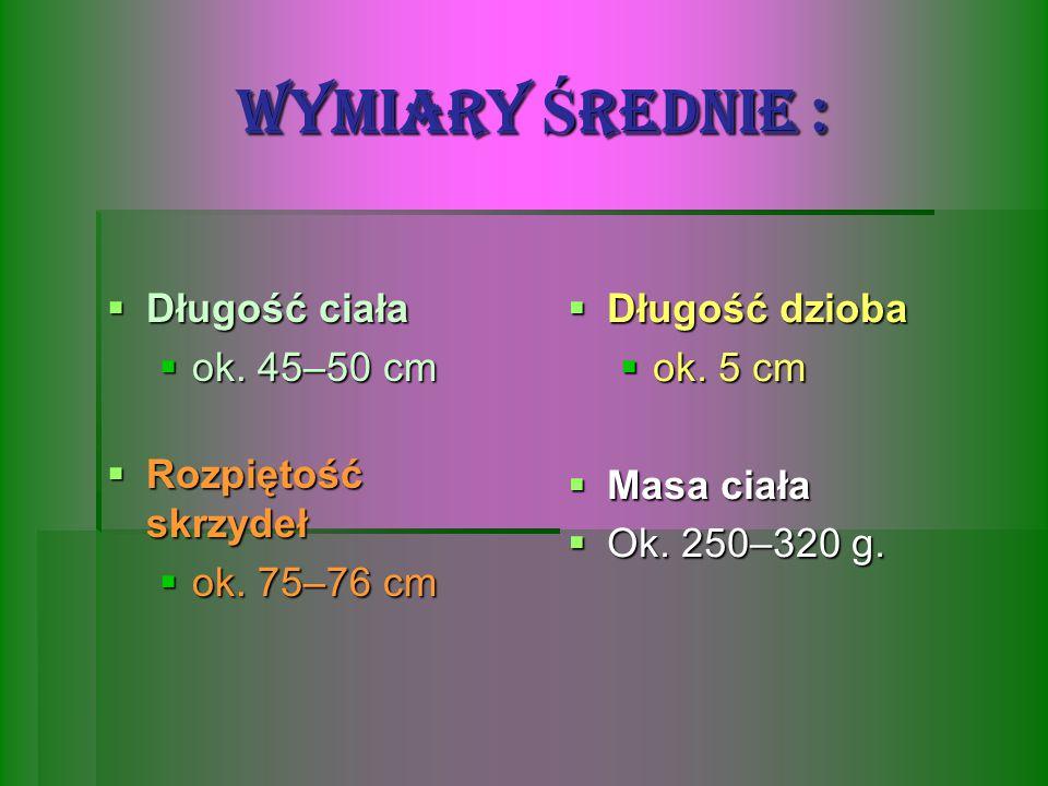 WYMIARY ŚREDNIE : Długość ciała ok. 45–50 cm Długość dzioba ok. 5 cm