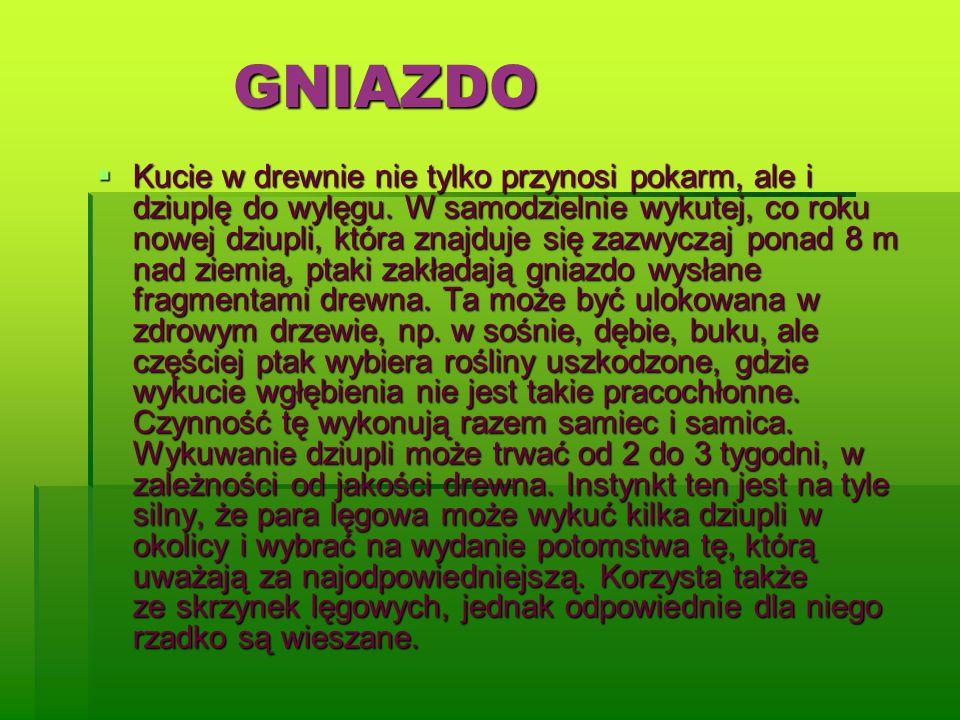 GNIAZDO
