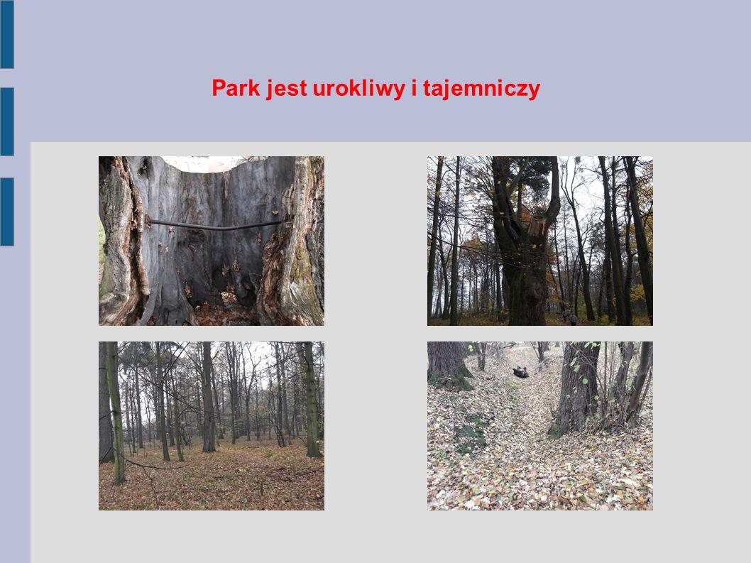 Park jest urokliwy i tajemniczy
