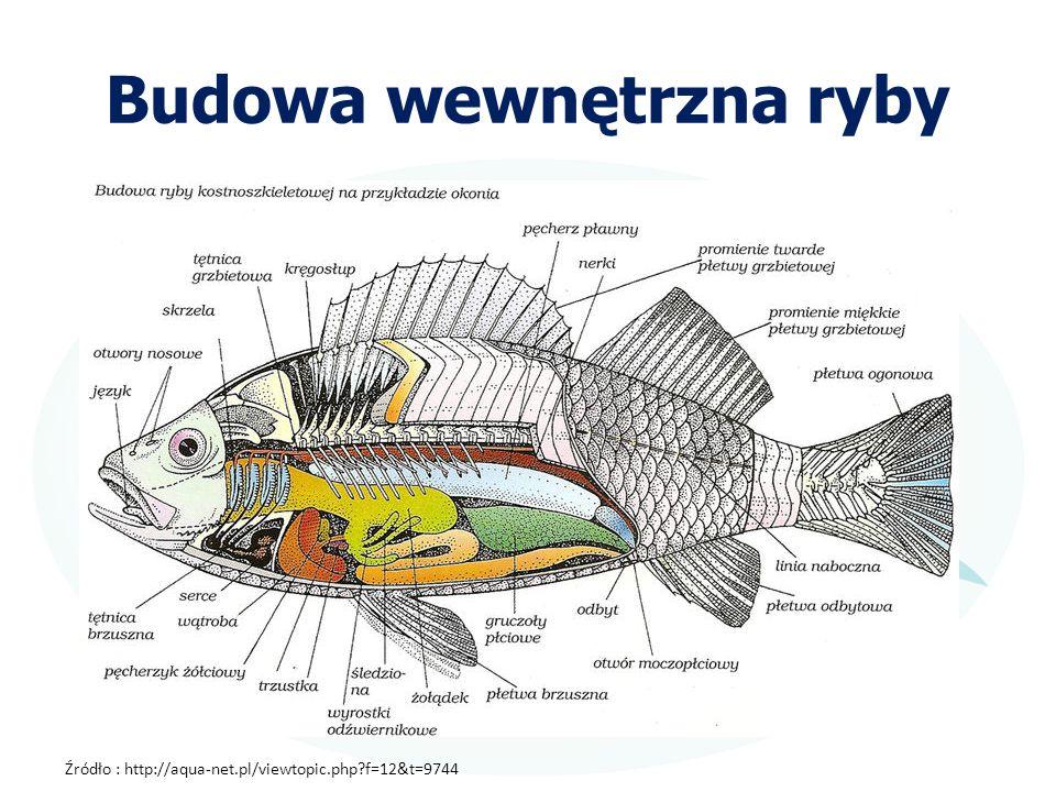 Budowa wewnętrzna ryby
