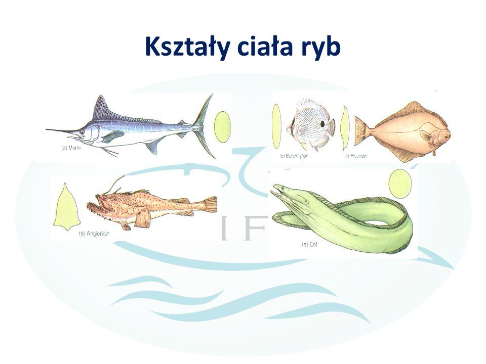 Kształy ciała ryb