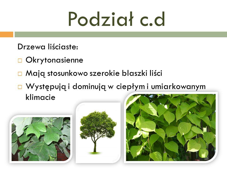 Podział c.d Drzewa liściaste: Okrytonasienne