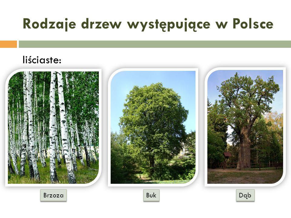 Rodzaje drzew występujące w Polsce
