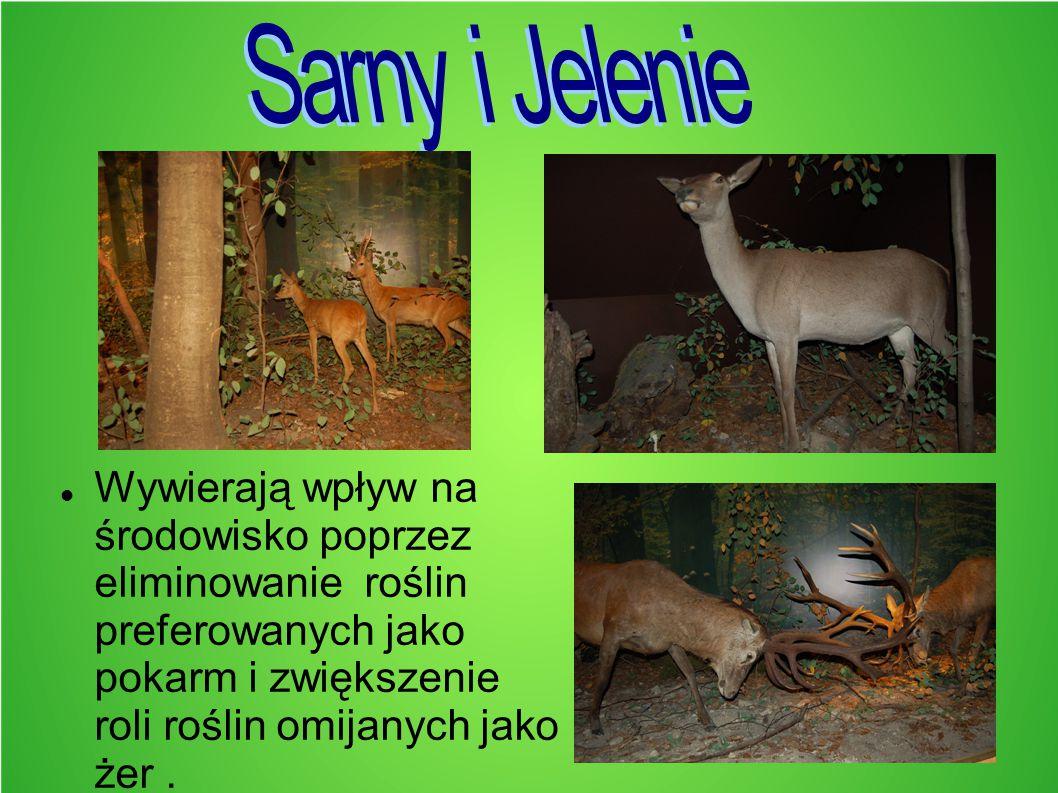 Sarny i Jelenie