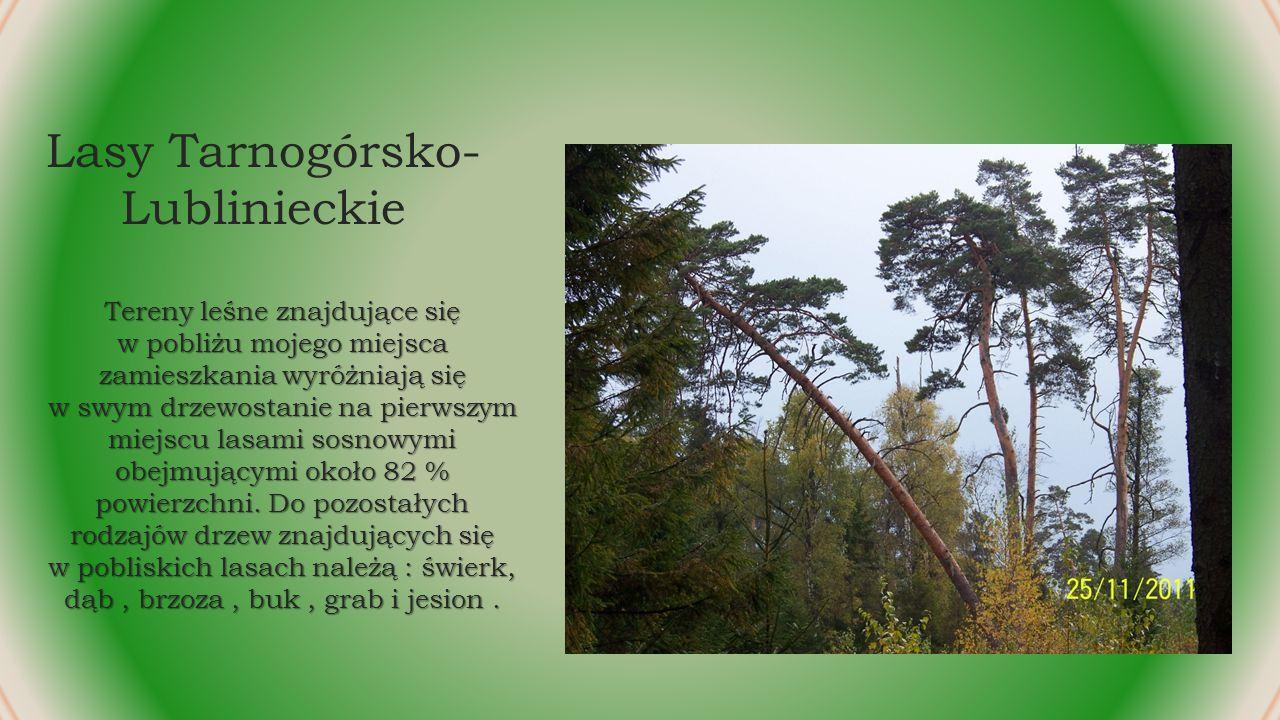 Lasy Tarnogórsko-Lublinieckie