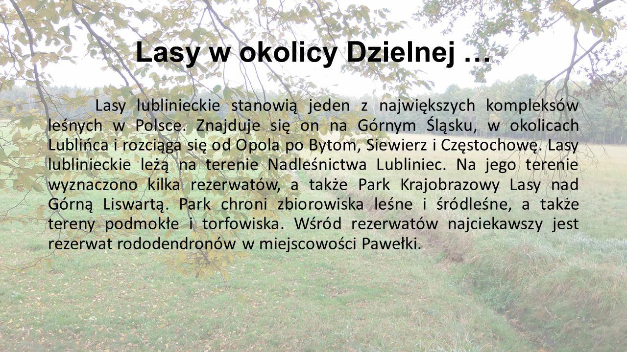 Lasy w okolicy Dzielnej …