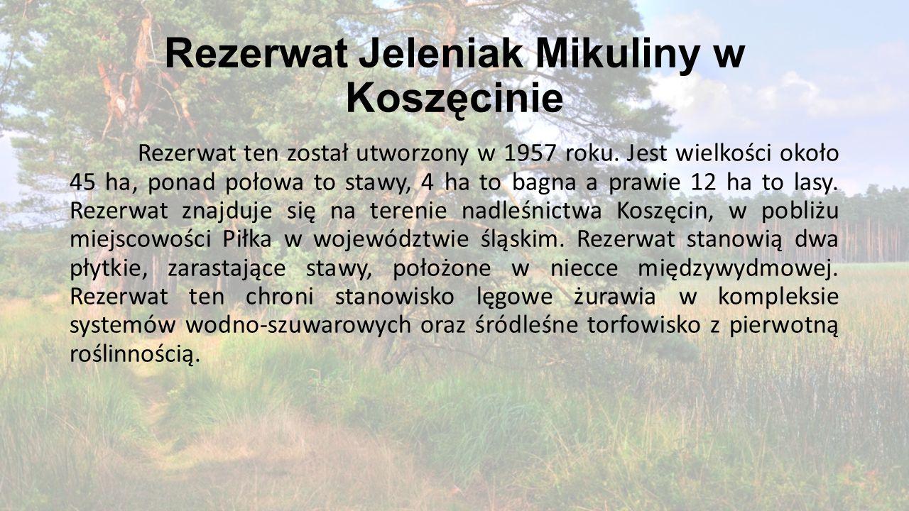 Rezerwat Jeleniak Mikuliny w Koszęcinie