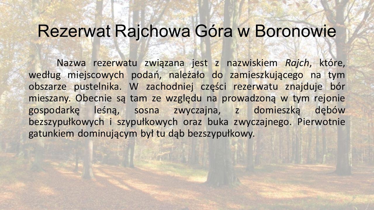 Rezerwat Rajchowa Góra w Boronowie