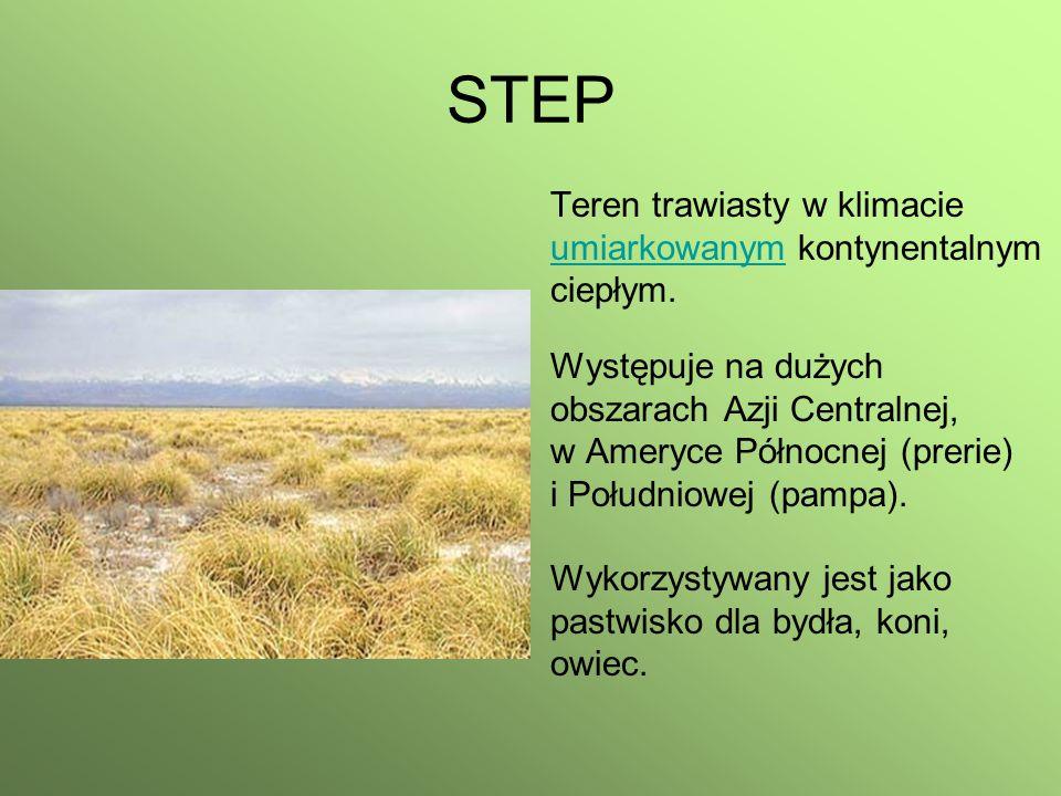 STEP Teren trawiasty w klimacie umiarkowanym kontynentalnym ciepłym.