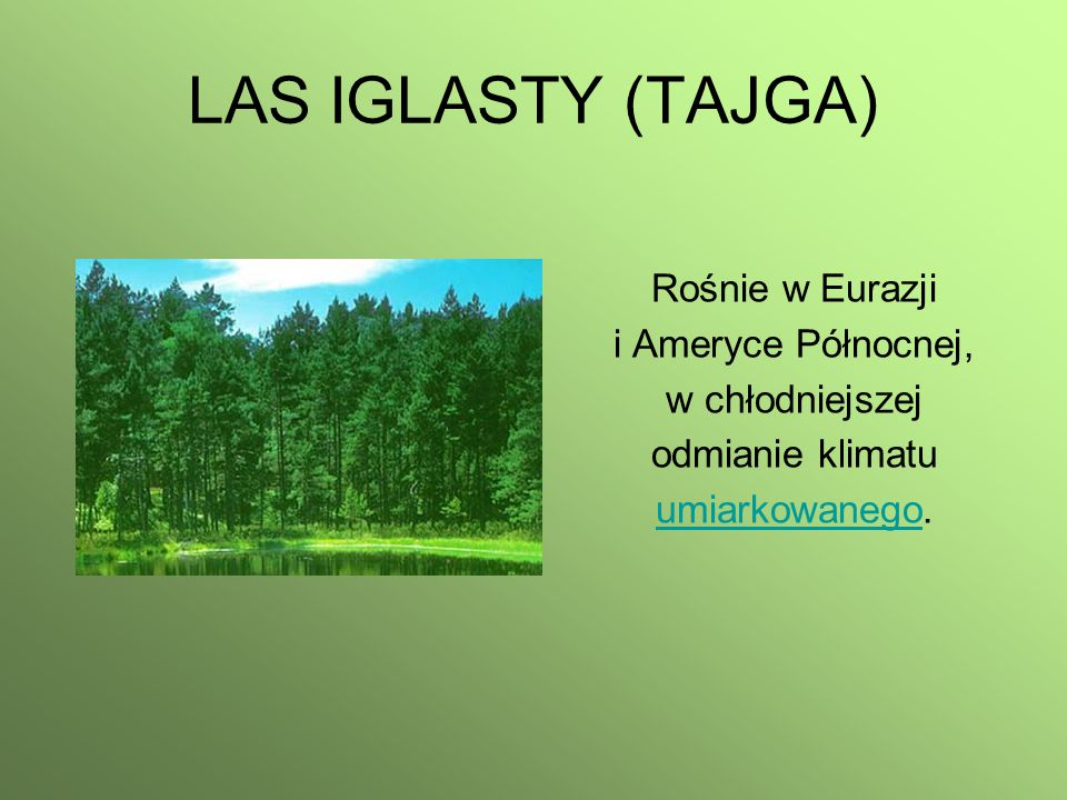 LAS IGLASTY (TAJGA) Rośnie w Eurazji i Ameryce Północnej,