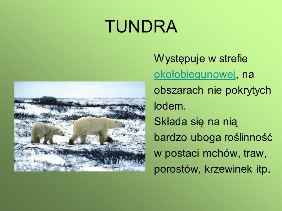 TUNDRA Występuje w strefie okołobiegunowej, na obszarach nie pokrytych