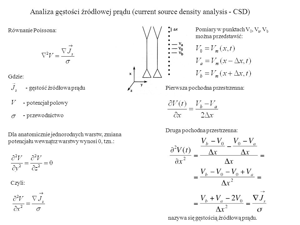 Analiza gęstości źródłowej prądu (current source density analysis - CSD)