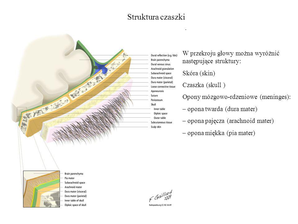 Struktura czaszki W przekroju głowy można wyróżnić następujące struktury: Skóra (skin) Czaszka (skull )