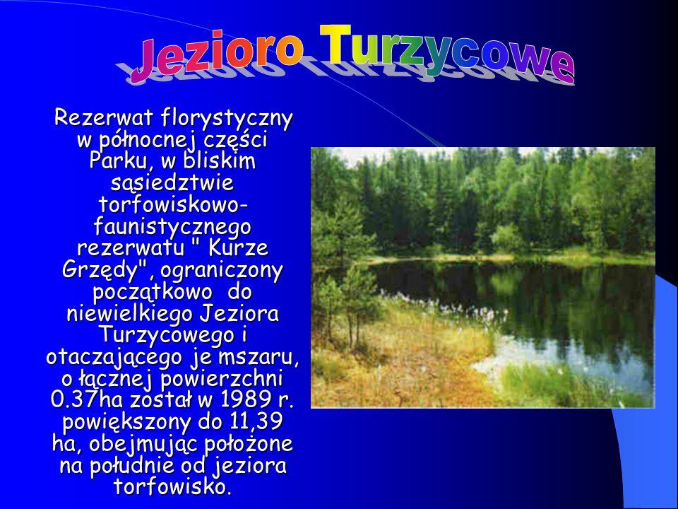Jezioro Turzycowe