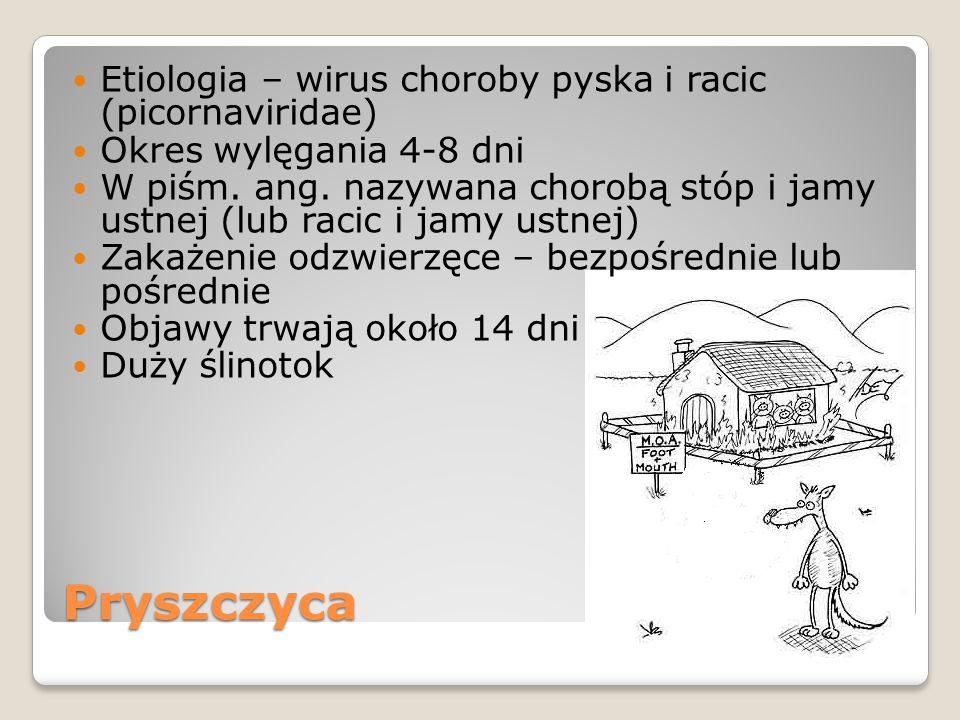 Pryszczyca Etiologia – wirus choroby pyska i racic (picornaviridae)
