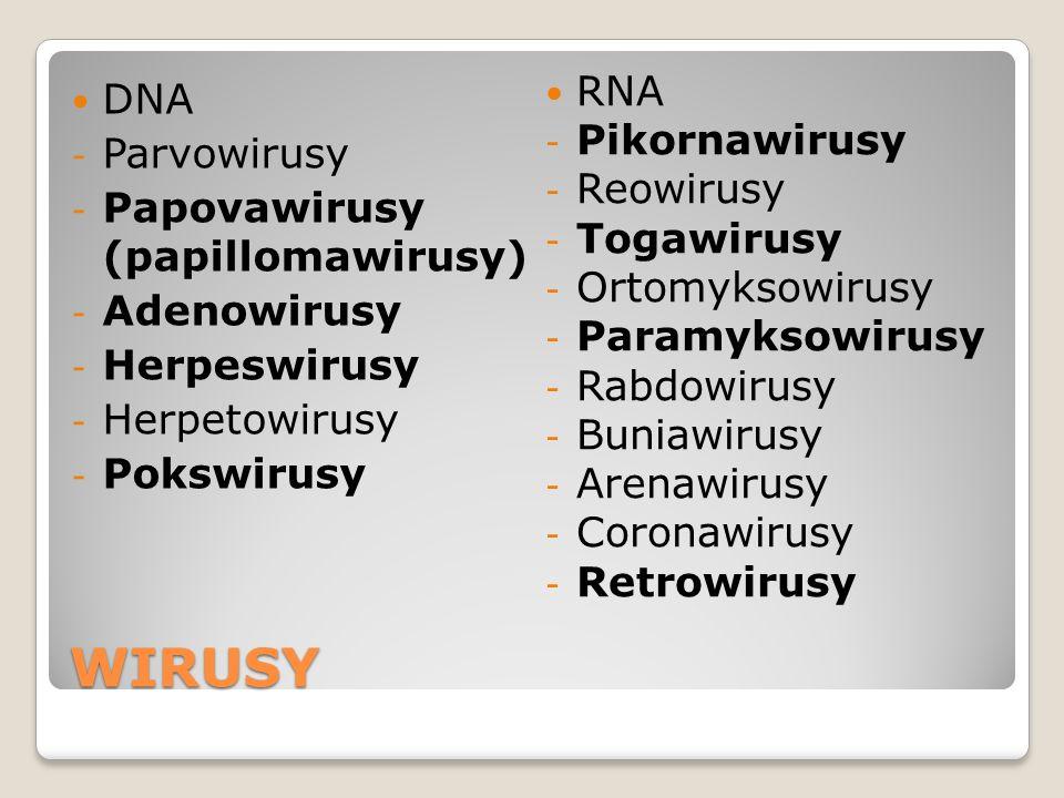 WIRUSY RNA DNA Pikornawirusy Parvowirusy Reowirusy