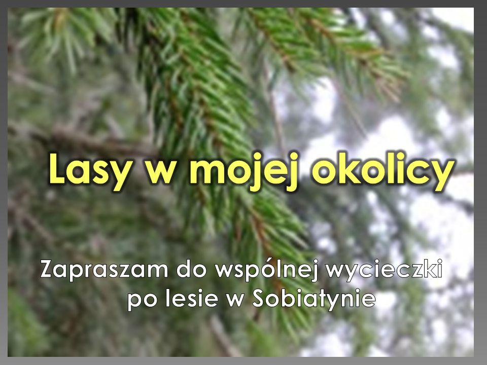 Zapraszam do wspólnej wycieczki po lesie w Sobiatynie