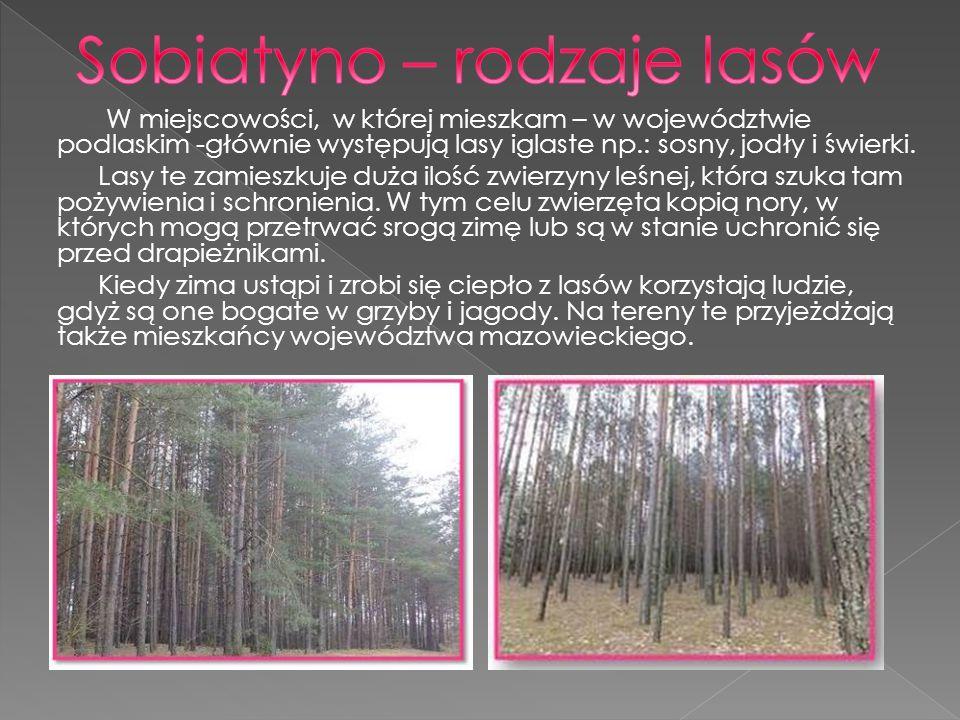 Sobiatyno – rodzaje lasów