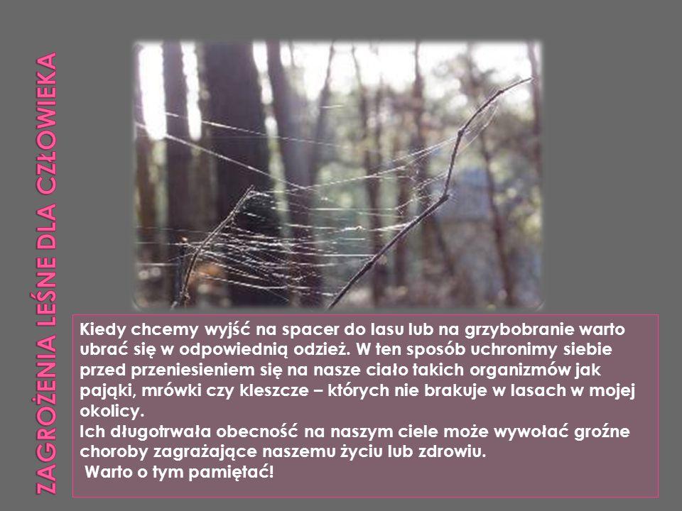 Zagrożenia leśne dla człowieka