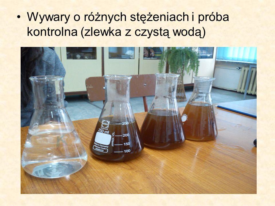 Wywary o różnych stężeniach i próba kontrolna (zlewka z czystą wodą)