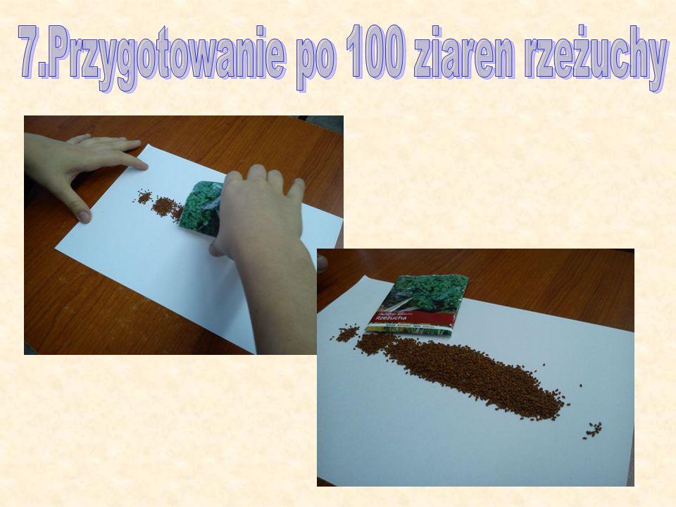 7.Przygotowanie po 100 ziaren rzeżuchy