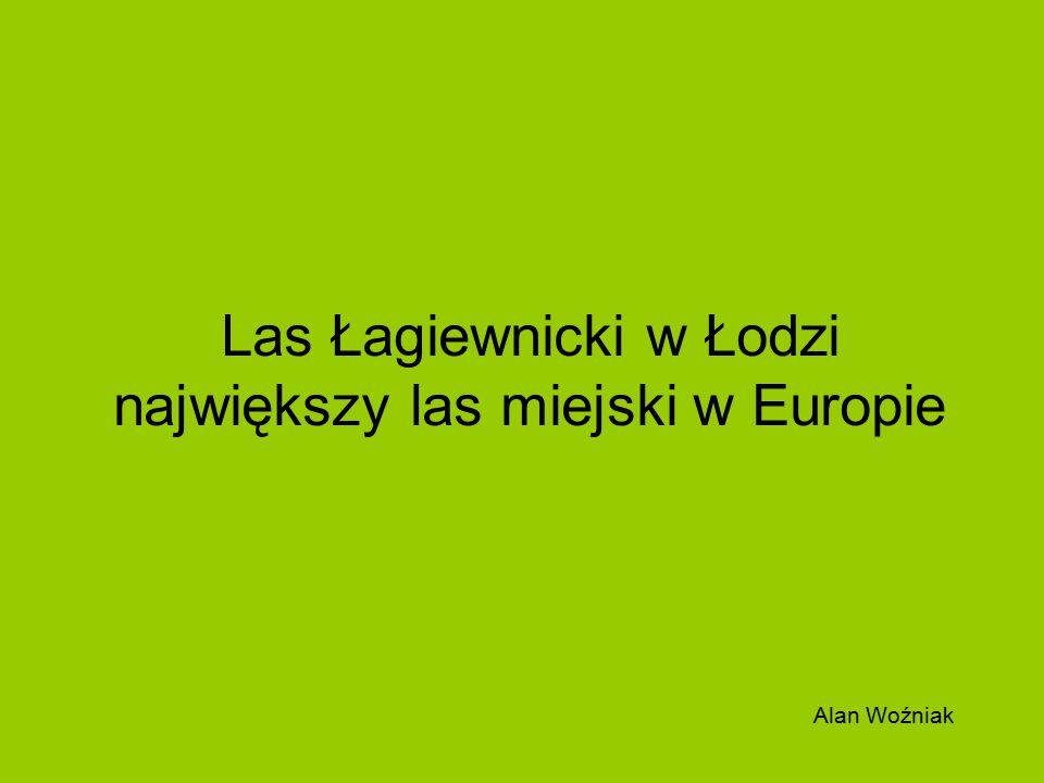 Las Łagiewnicki w Łodzi największy las miejski w Europie
