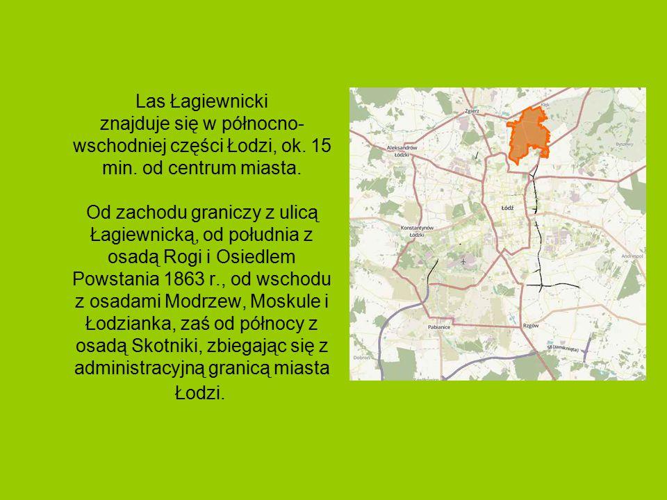Las Łagiewnicki znajduje się w północno-wschodniej części Łodzi, ok